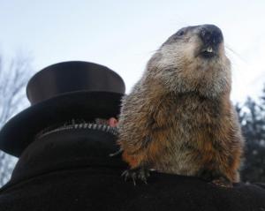 groundhog-day-2013